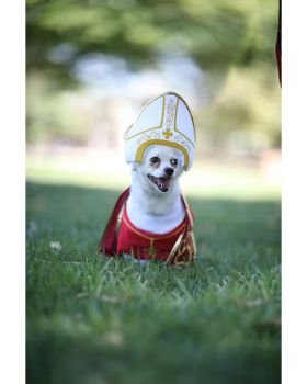 California Costumes PET20127 Holy Hound Dog Costume
