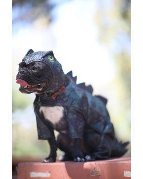 California Costumes PET20168 Stegosaurus Dog Costume